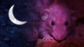Rüyada fare görmek ne demektir, rüyada fare görmek ne anlama gelir?