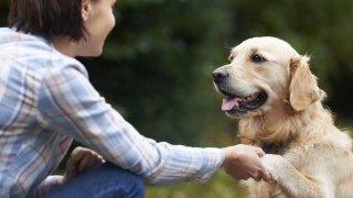 Köpek bakımında dikkat etmeniz gereken çok önemli detaylar...