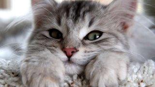 En güzel en popüler dişi kedi isimleri...