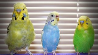 Kuş bakımı, kuş sağlığı ve hastalıkları hakkında önemli bilgiler