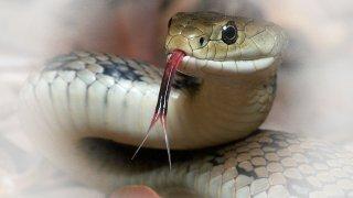 Rüyada yılan görmek ne anlama gelir?