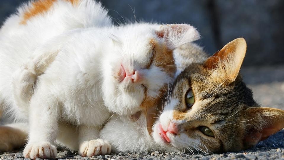 En güzel en popüler erkek kedi isimleri...