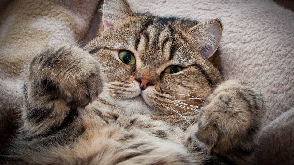 Rüyada kedi görmek ne anlama gelir? Rüyada kedi görmek neye işarettir?